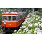 箱根のあじさい電車に乗りたい!見頃の時期やおすすめのお土産は?