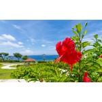 沖縄で人気のお土産は?ご当地フォルムカードなどおすすめ雑貨をご紹介