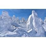 山形・蔵王で樹氷の絶景を堪能!「樹氷まつり」はいつから?